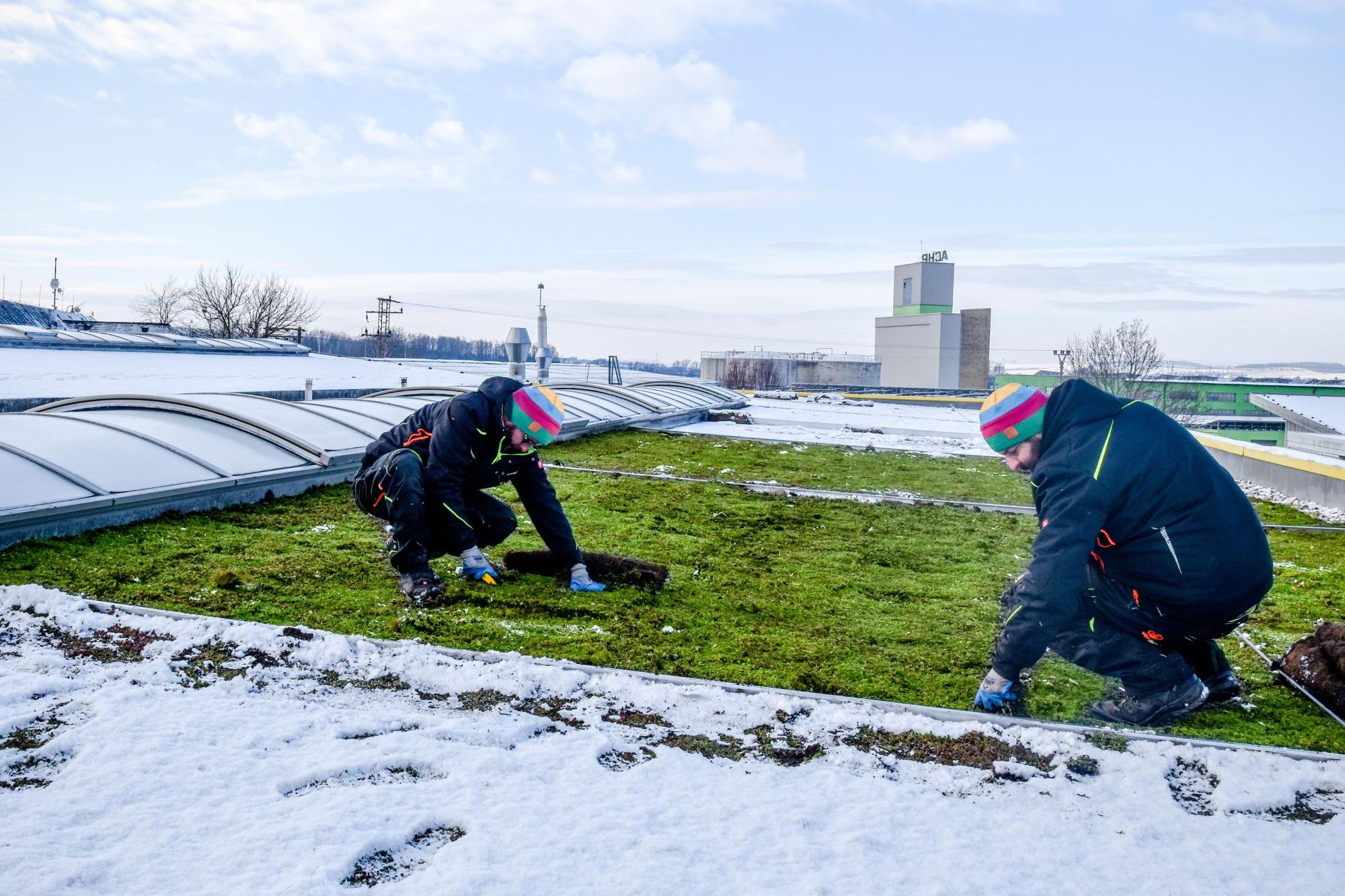 Instalace zelené střechy v zimě? Žádný problém