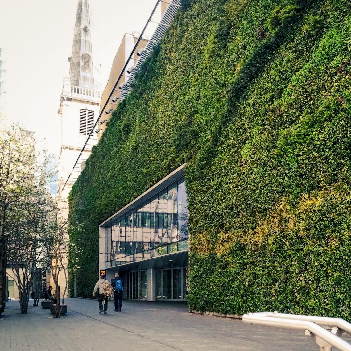 Ideálne riešenie pre trvale zelené steny