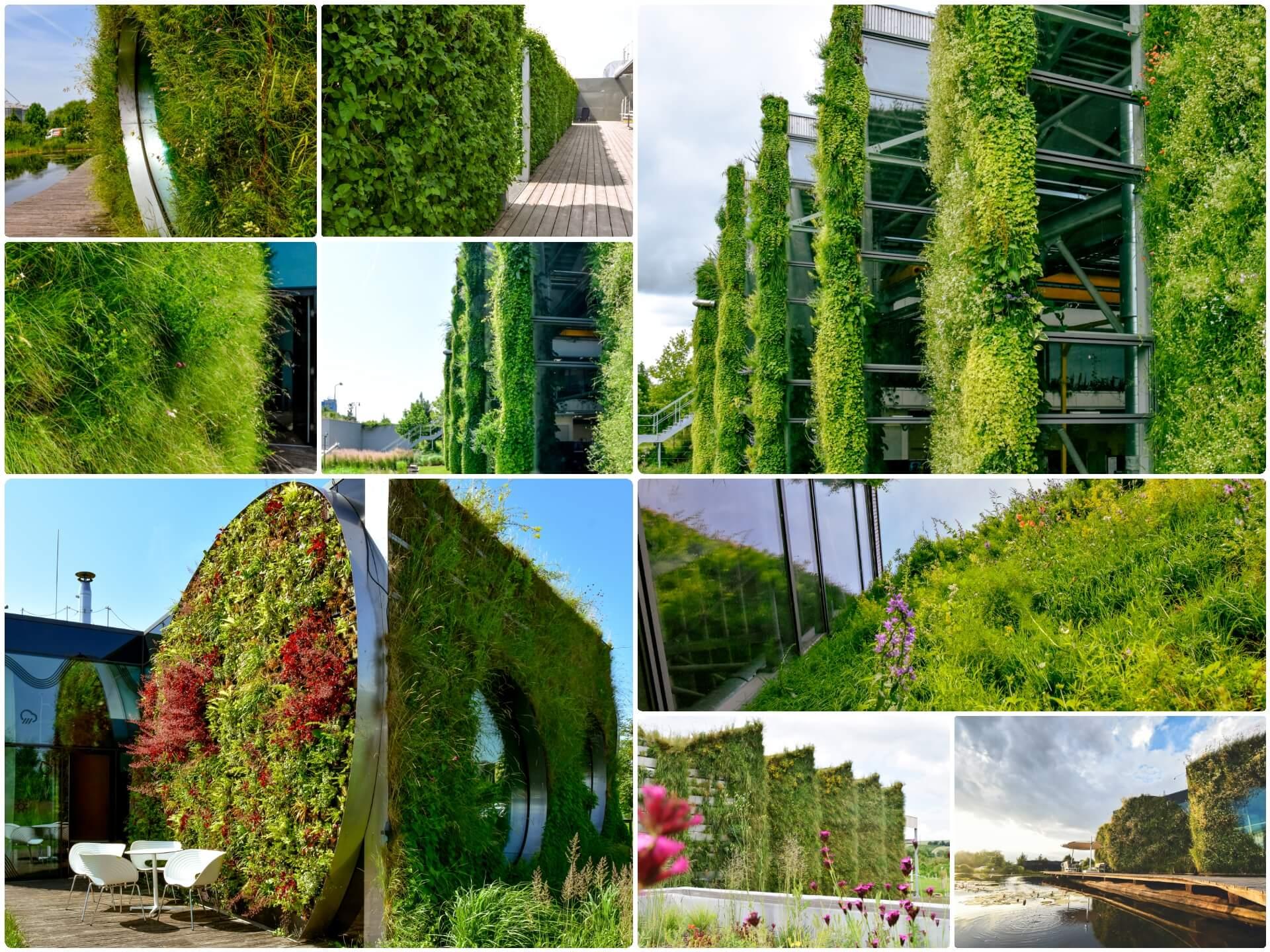 Ako sa starať o zelené fasády a steny?
